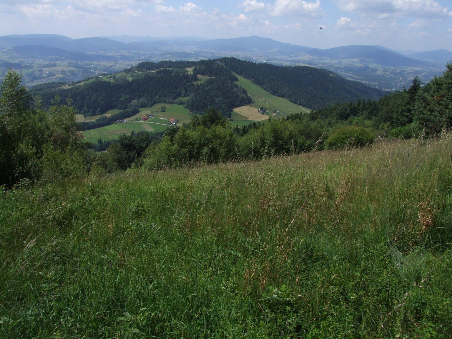 Łyska Góra