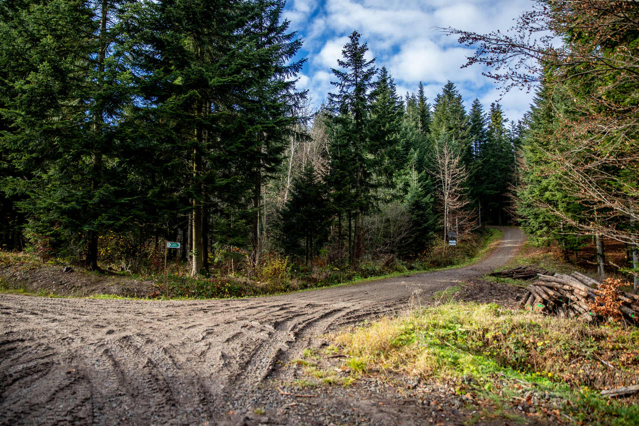 Ścieżka przyrodniczo-leśna Pod Ostrą