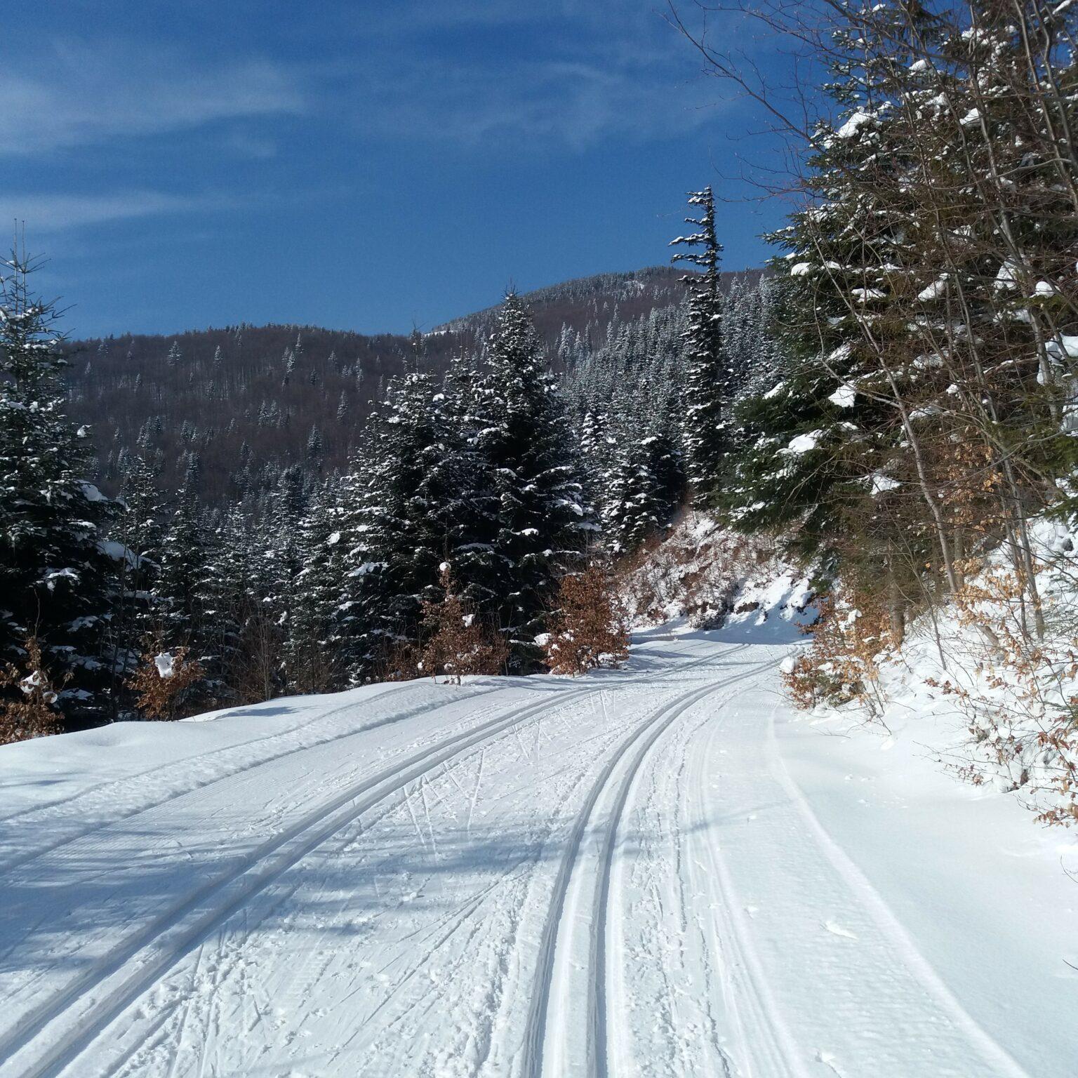 """Trasa narciarstwa biegowego """"Mogielica"""""""