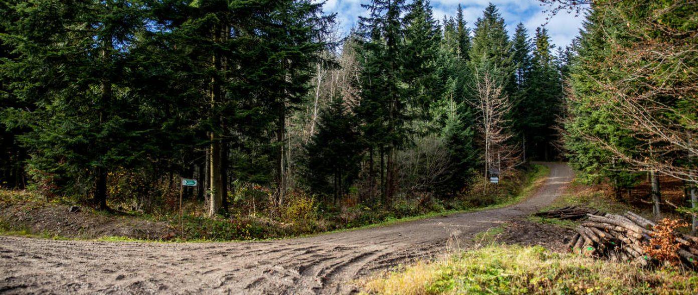 """Ścieżka przyrodniczo-leśna """"Pod Ostrą"""""""
